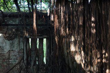 Wilde begroeiing / vegetatie in de historische stad Tainan op Taiwan van Michiel Dros