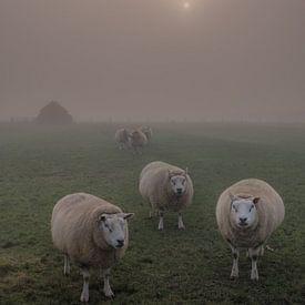 Schapen in de mist van Moetwil en van Dijk - Fotografie