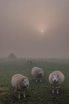 Schapen in de mist met zonnetje van Moetwil en van Dijk - Fotografie