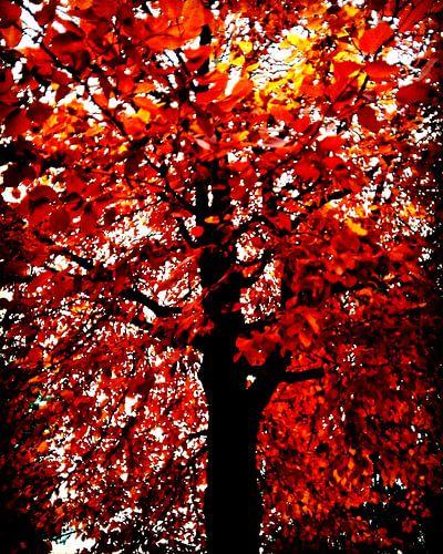 Baum der Flammen von mimulux patricia no