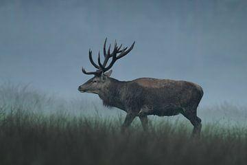 Red Deer sur Menno Schaefer