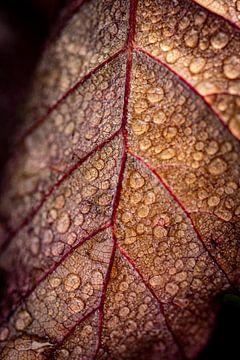 Dauwdruppels op herfstblad van Helga van de Kar