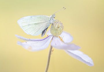 Papillon sur une fleur sur natascha verbij