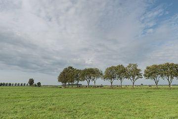 Polderlandschap met bomenrij in de Alblasserwaard van Beeldbank Alblasserwaard