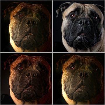 four dogs van Jan van den Heuij