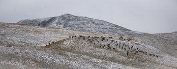 Tibetan Shepperd von Anahi Clemens