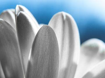 Bloem / Bloemblaadje / Blad / Lucht / Natuur / Licht / Wit / Blauw / Close-Up Macro van Art By Dominic