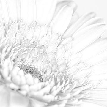 """""""High key"""" Blume schwarz/weiß 3 von Albert Mendelewski"""
