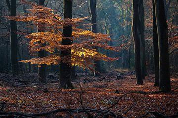 Herbstlicher Wald von Edwin Butter