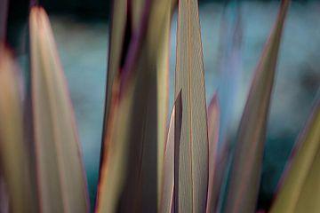 Kühle Linien von Gras von Hiske Boon
