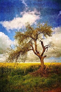 Oude rotte boom van Claudia Evans