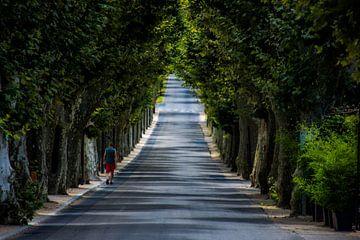 Bomenlaan in Zuid-Frankrijk van Hugo Braun