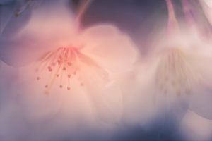 Softe, dromerige lente