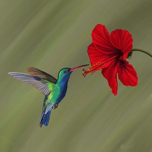 Kolibrie bij rode hibiscusbloem