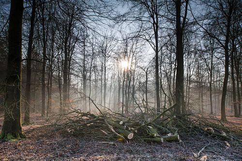 Drenthe, Bos, Nederland