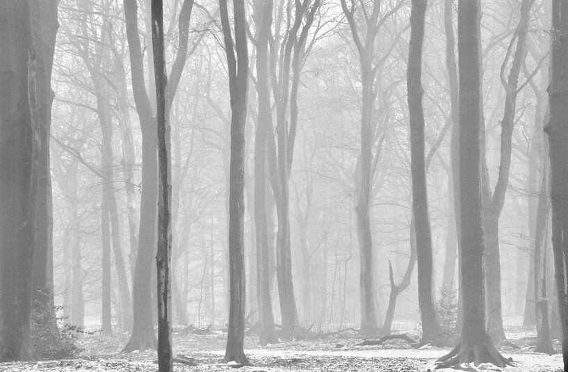Mistige ochtend op landgoed Clingendael von Sven Zoeteman