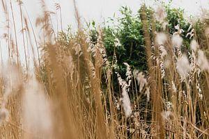 Duingrassen in het Westduinpark in Scheveningen van Anne Zwagers