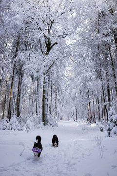 Border Collies im Schnee von Pieter Bezuijen