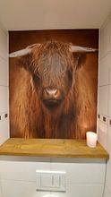 Photo de nos clients: Highlander sur Marja van den Hurk, sur fond d'écran