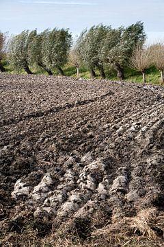 Omgeploegd veld en wilgen in de wind van Peter de Kievith Fotografie