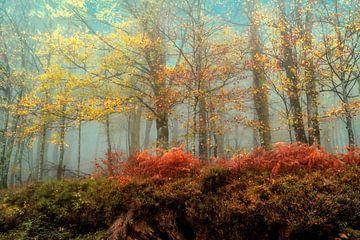 Hêtres dans la brume sur Lars van de Goor