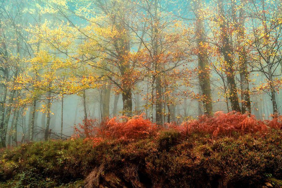 Beuken in de Mist van Lars van de Goor