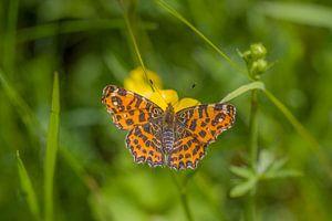 Vlinder van Marielle Govers