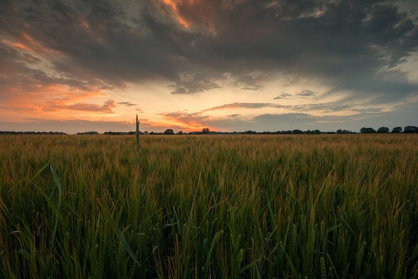 Field at sunset van Malte Pott
