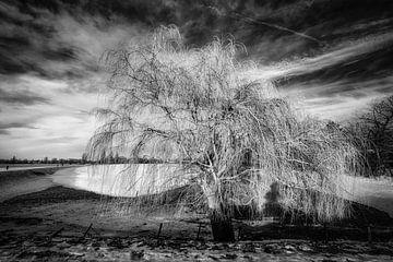 Winterlandschaft mit Baum und Schnee und Wolkenformation in schwarz-weiss von Dieter Walther