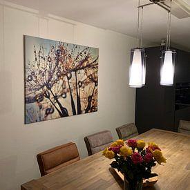 Kundenfoto: Pusteblume Farbspektrum von Julia Delgado, auf leinwand
