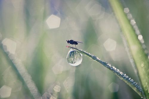 Fly on druplet von Melle van der Wildt