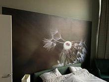 Klantfoto: Paardenbloem van Götwin van Bergen, als naadloos behang