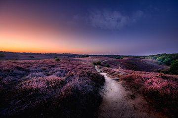 Weg durch das Moor von Rene Siebring