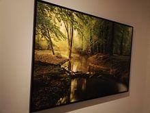 Klantfoto: Leuvenumse Beek in het Leuvenumse bos op een vroege herfst ochtend van Sjoerd van der Wal, op canvas