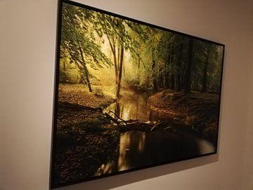 Kundenfoto: Nebenfluss in einem Buchebaumwald während eines frühen Herbstmorgens von Sjoerd van der Wal