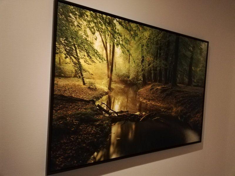 Kundenfoto: Nebenfluss in einem Buchebaumwald während eines frühen Herbstmorgens von Sjoerd van der Wal, auf leinwand