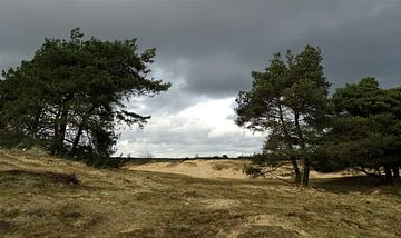 Het Nationaal Park Drents-Friese Wold bij Appelscha van Tineke Laverman