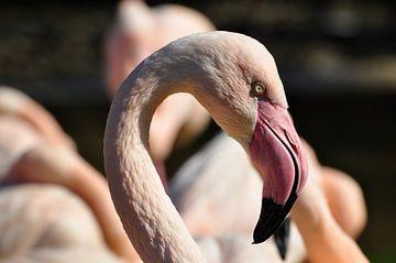 Flamingo van Picture Partners
