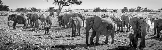 Zwart wit panorama van een kudde olifanten in Etosha Nationaal Park, Namibië
