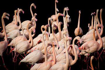Flamingo van Vivian van den Ende