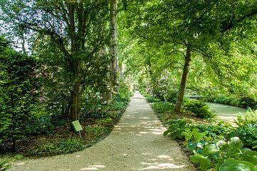 Rotterdam-Botanische Tuinen Trompenburg 05 von Hans Blommestijn