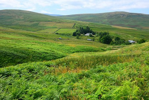 Isolated in the Southern Uplands