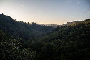 Surplombant la forêt sur Adinda Heeres