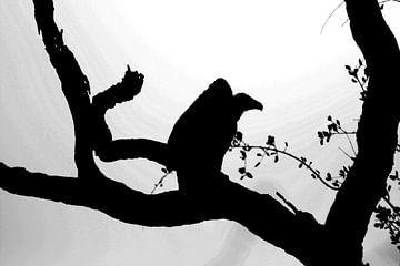Gier op boomtak Zuid Afrika van Sandra van Vugt