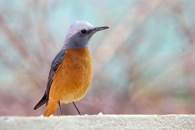 Oiseau chanteur couleur pastel sur Inge Hogenbijl