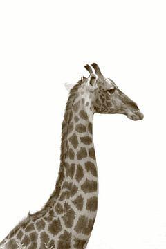 Langer Hals und Kopf einer Giraffe in Sepia-Farbe von Bobsphotography