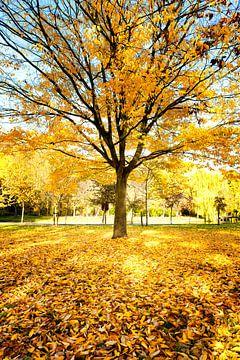 Herbstliche Farben von Stef Boey