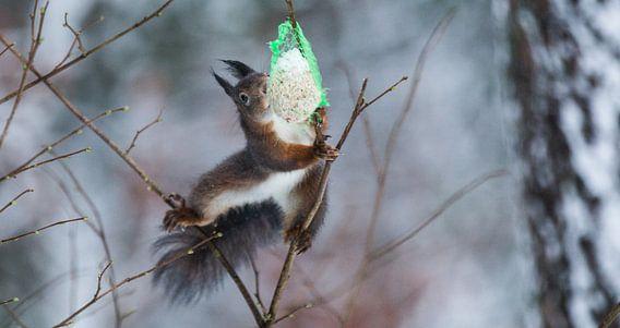 Squirrel wants food van Mark Zanderink