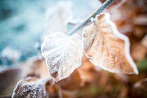 Herfst/winter bladeren van