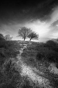 het pad van Rene van Rijswijk